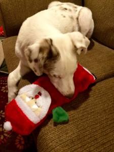 Houston & Santa